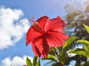 花をモチーフにしたヨガ哲学
